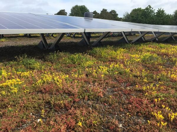 Sedum og Solceller er flott å se på og gjør godt for miljøet